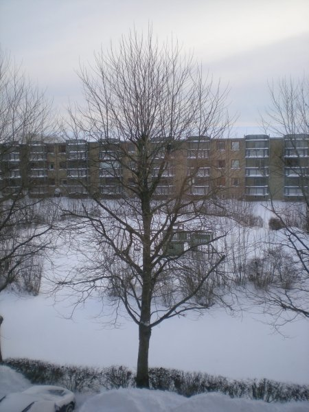 2010/01/30/001.jpg